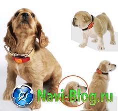 GPS ошейник для собак MSP340 Pettrack